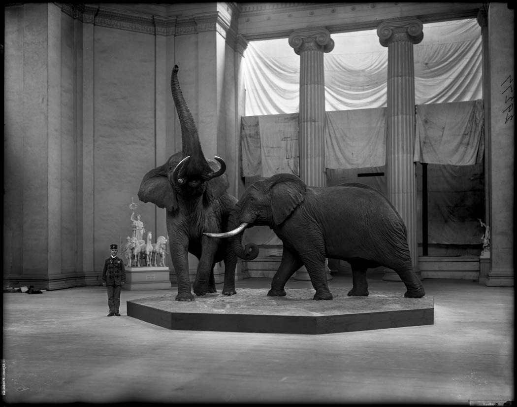 museum dinosaurus  5 Museum Dinosaurus Termegah Di Dunia FMNH Elephants