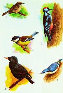 полезные птицы