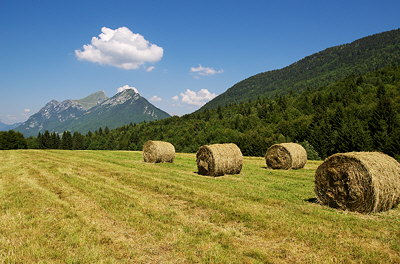 Image of a rural landscape under a blue summer sky