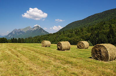 Picture of a rural landscape with hay stacks in the mountains of Massif des Bauges