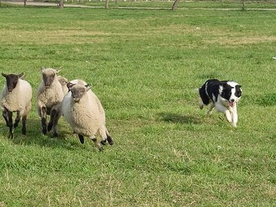 Image Result For Dog Training Paso