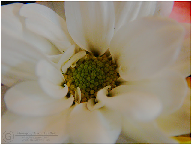 Photograph White Flower