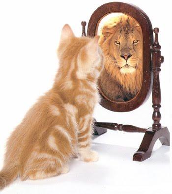 Gatinho olhando no espelho