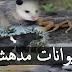 عجائب الطبيعة : حيوانات مدهشة