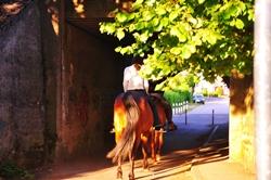 Leuchtender Pferdehintern...