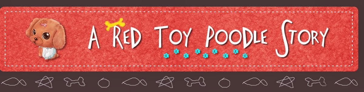 A Red Toy Poodle Story