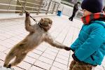 Os Monkeys Não Encarceram