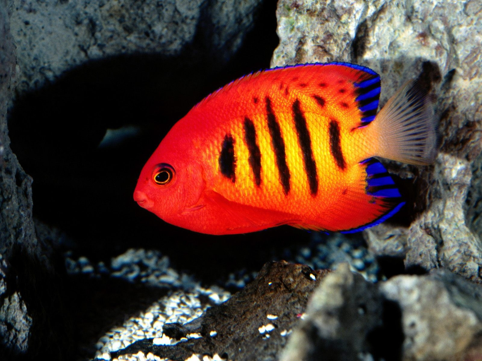 Colorful Fish Deep Under The Sea Animal Photography