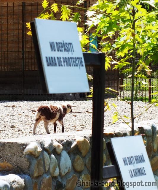 miel zoo pitesti