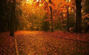 #2 Autumn Wallpaper