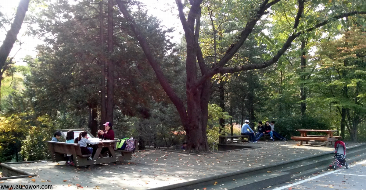Mesas para picnic en el Arboreto Hongneung de Seúl