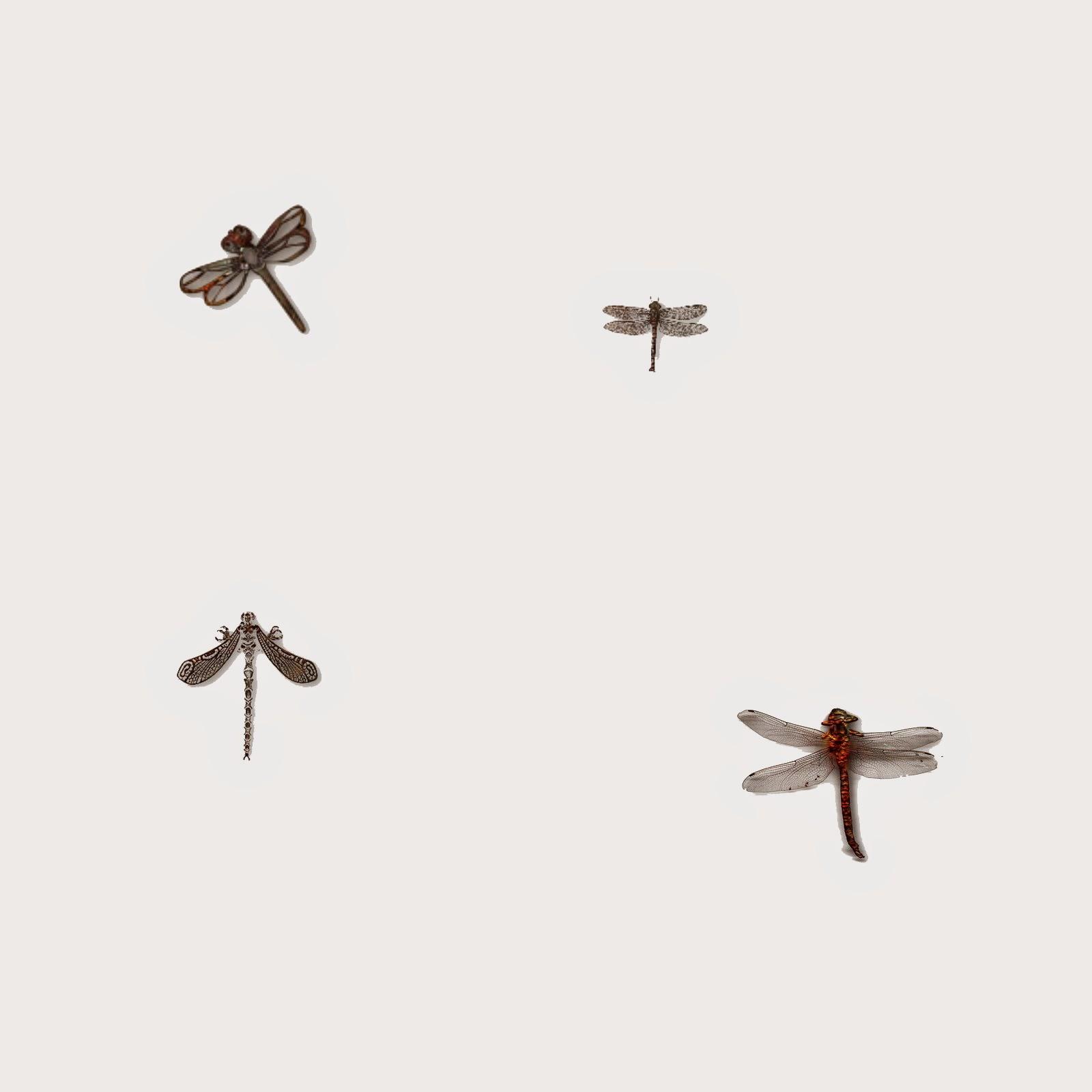 http://2.bp.blogspot.com/-TcRjUL2EMLQ/U_9yR-uA_6I/AAAAAAAAEEc/wefMaNgt6jI/s1600/dragonflies.jpg