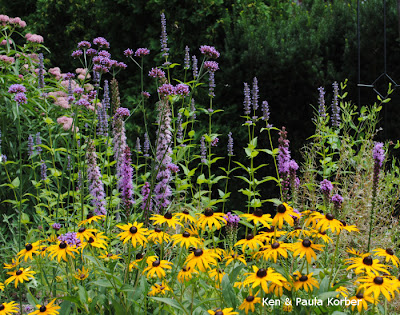 Swamp Milkweed , liatris and Rudebeckia