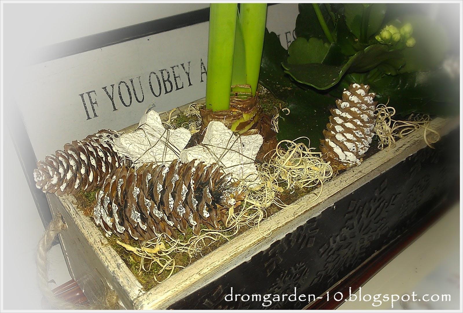 Drömgården: vinterplantering med amaryllis