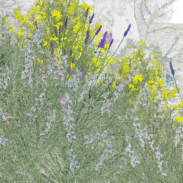 plantas meliferas, dibujo