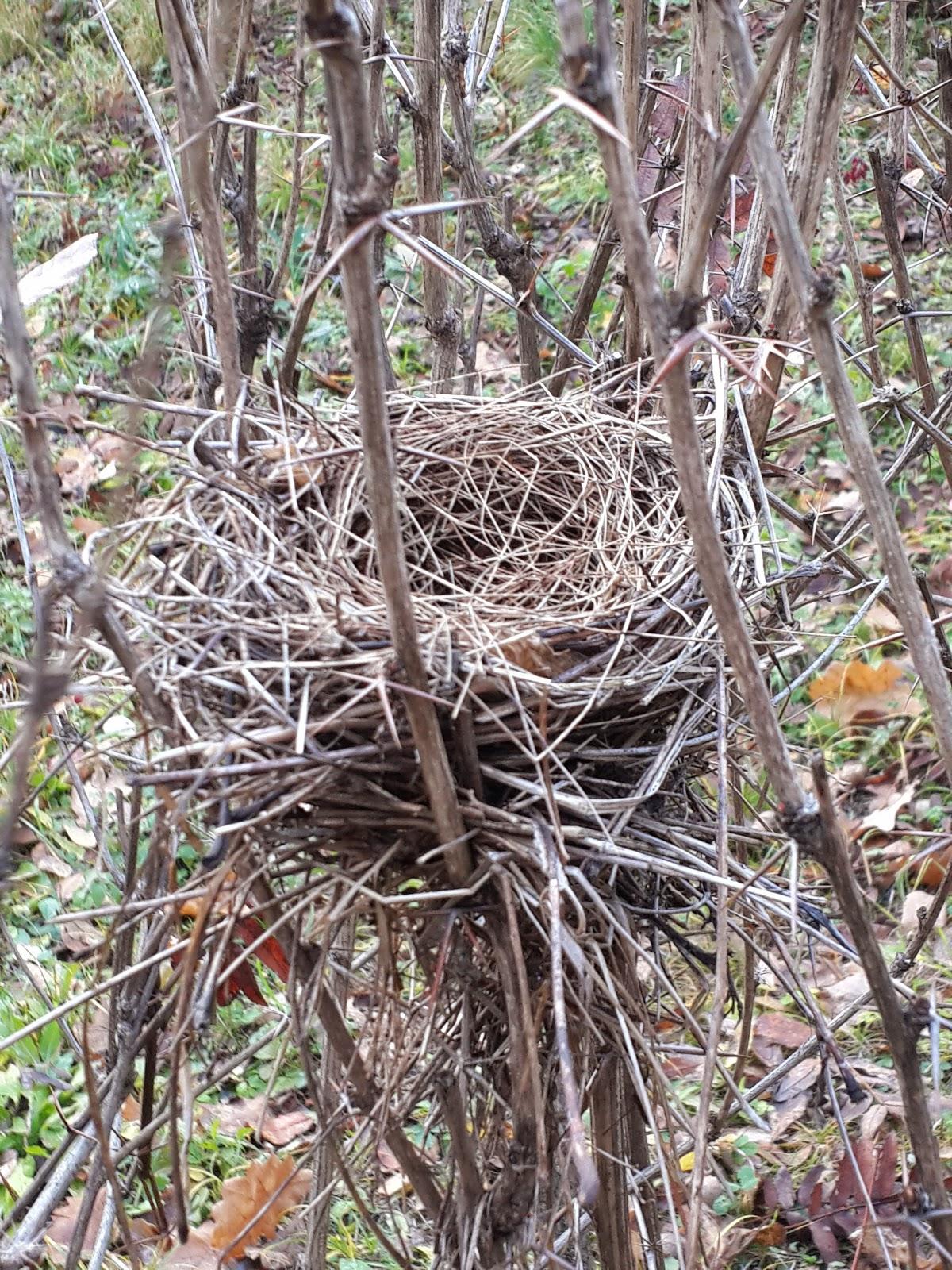 гнездо в доступности руки