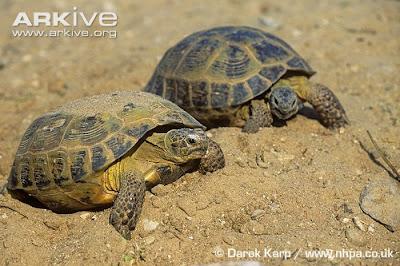 Just A Kid=: Turtle VS Tortoise