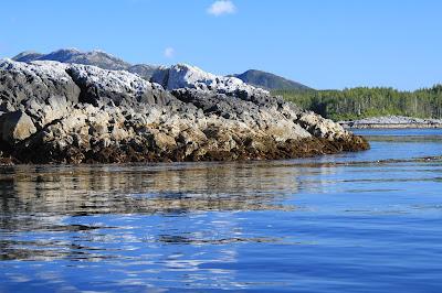 Intertidal Zonation Colors at Alexander Island