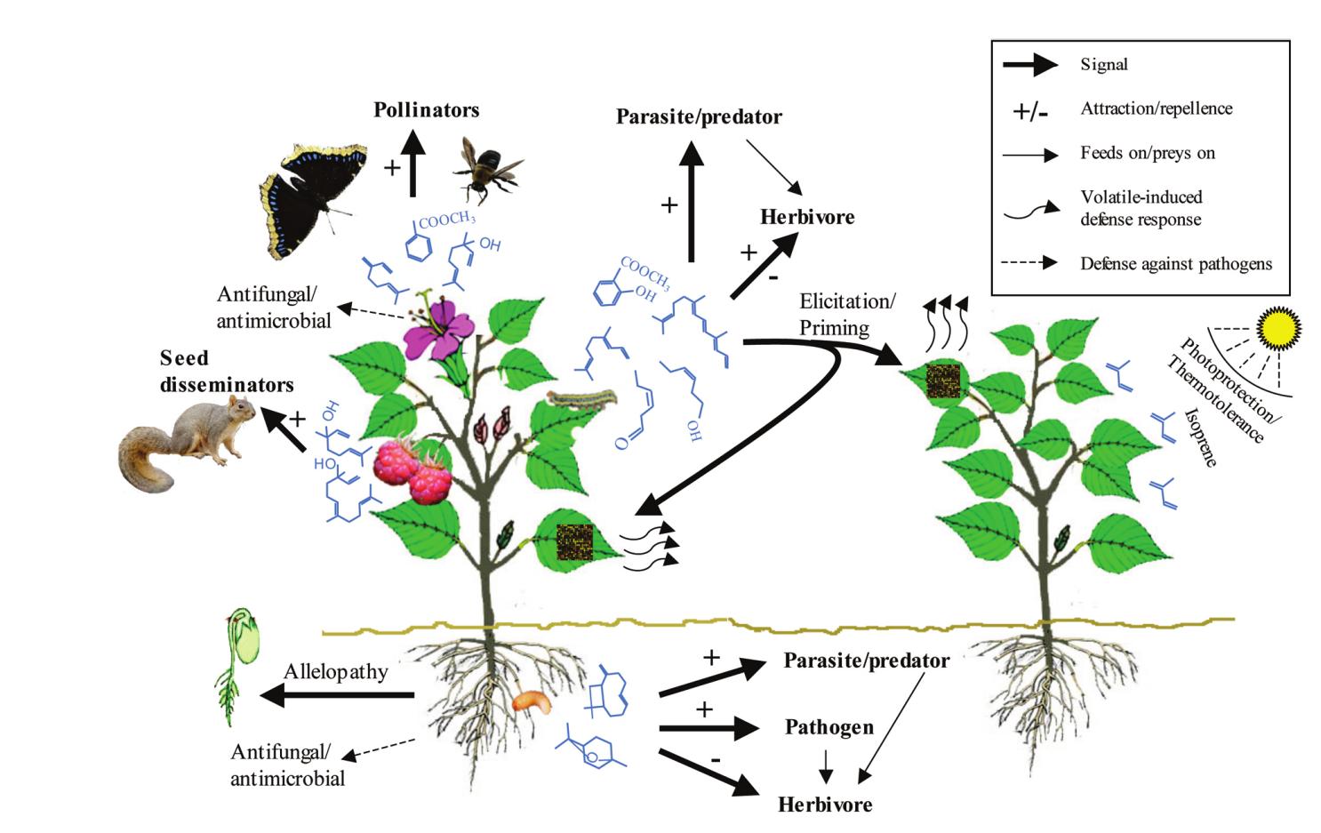 plantas con saponinas esteroidales