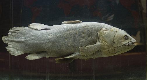 Ikan dasar laut Coelacanth
