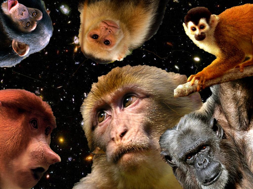 Resultado de imagen de Hemos evolucionado desde seres primitivos
