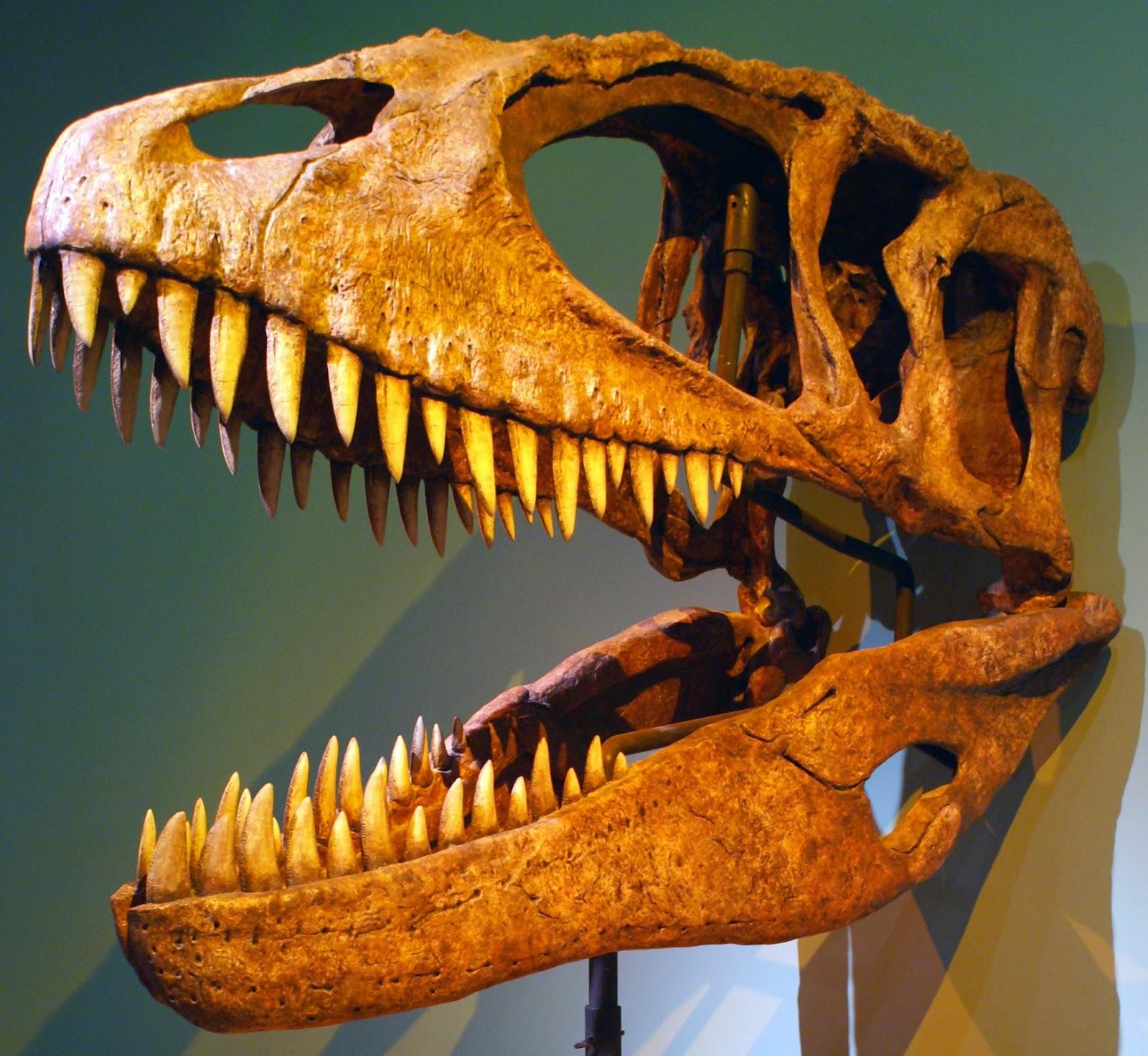 Il Carcharodontosaurus visse in Nordafrica tra 102 e 94 milioni
