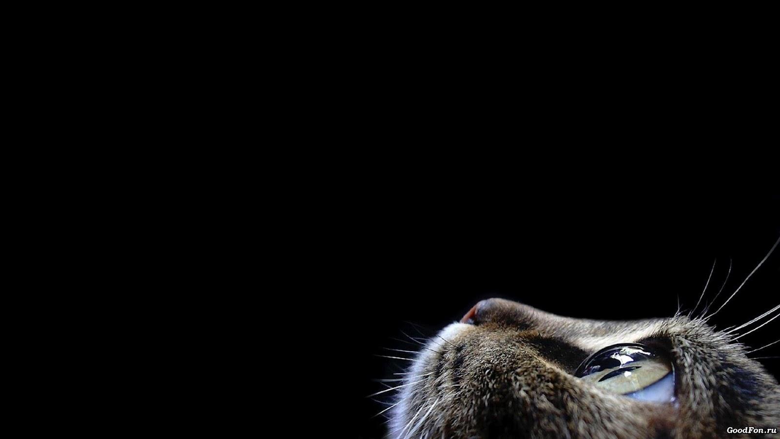http://2.bp.blogspot.com/-TeRTSUnhNzA/T8cqQ5SUuvI/AAAAAAAAaN4/ZwOp3SlPqAU/s1600/cat_wallpaper.jpg