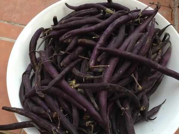 Jud as negras recetas de cocina for Cocinar judias negras