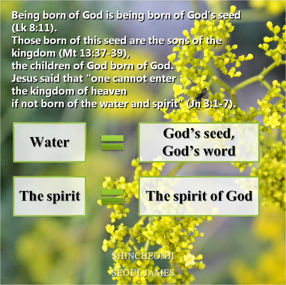 Quotes About Seeds Of Faith