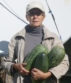 Как вырастить кабачки на Сахалине
