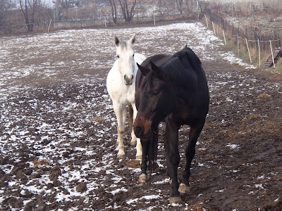 konie, jazda konna w zimie, jazda w terenie, gołoledź, oblodzenie