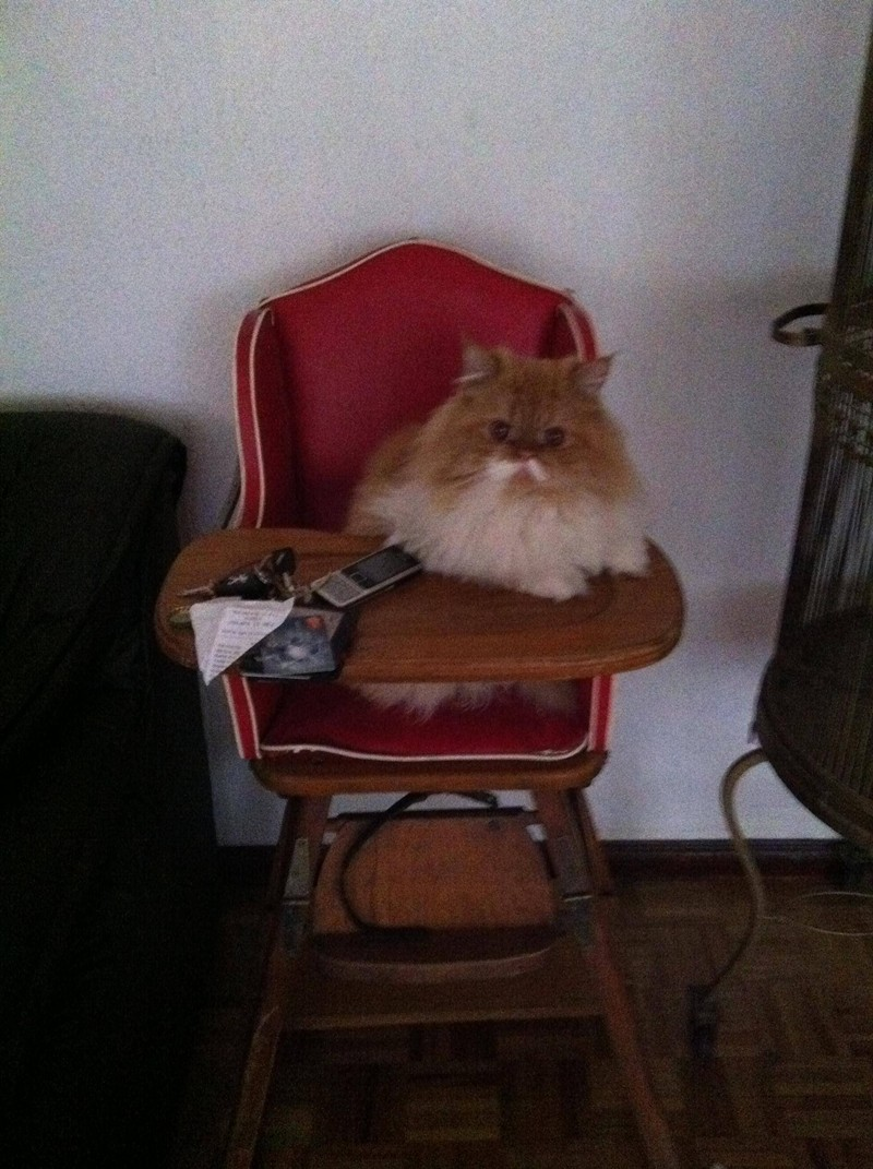 funny cat pictures, cat sits on baby's chair