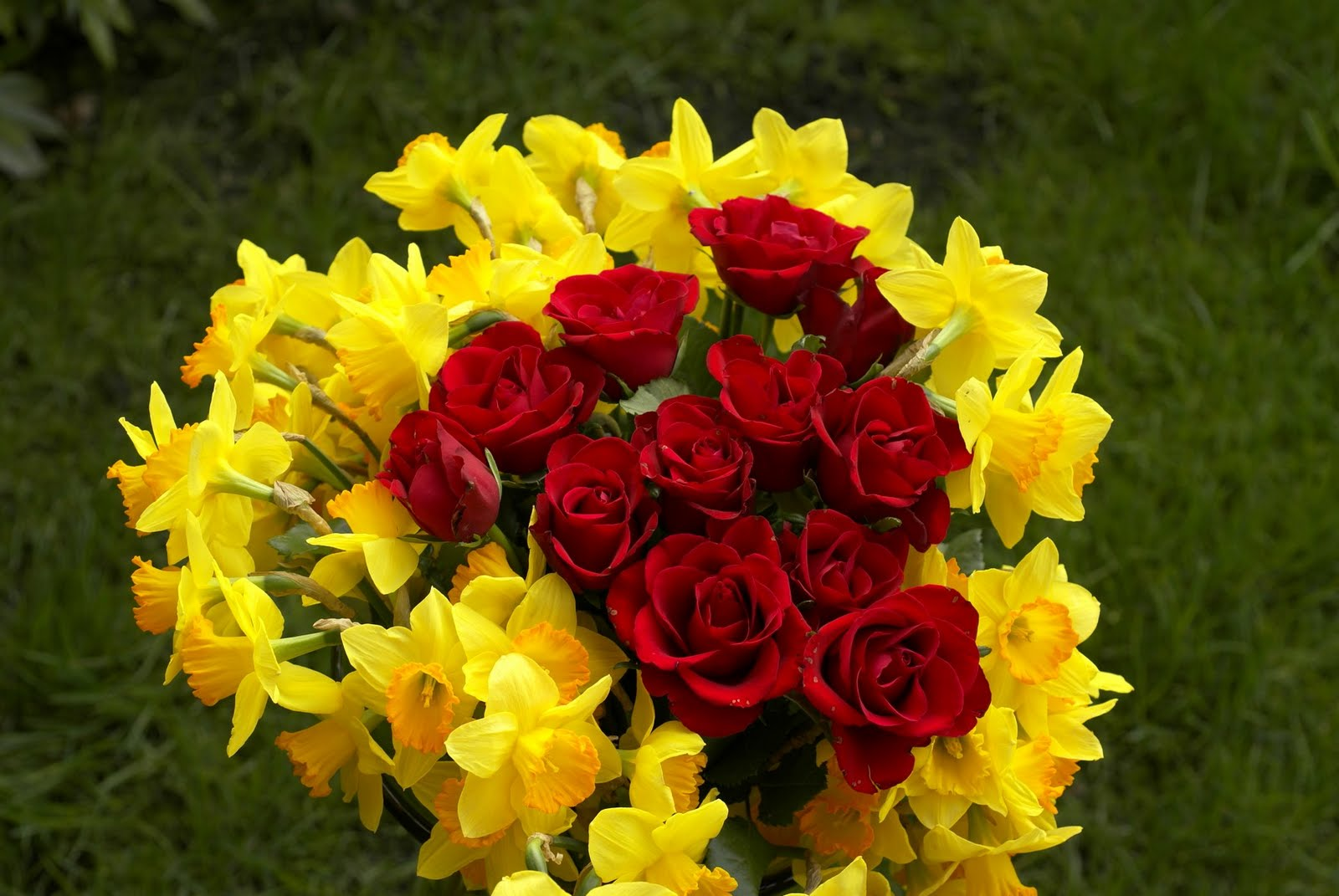 Flowers, Rose Flowers,ooty Rose Flowers, Indian Rose Flowers, Flowers