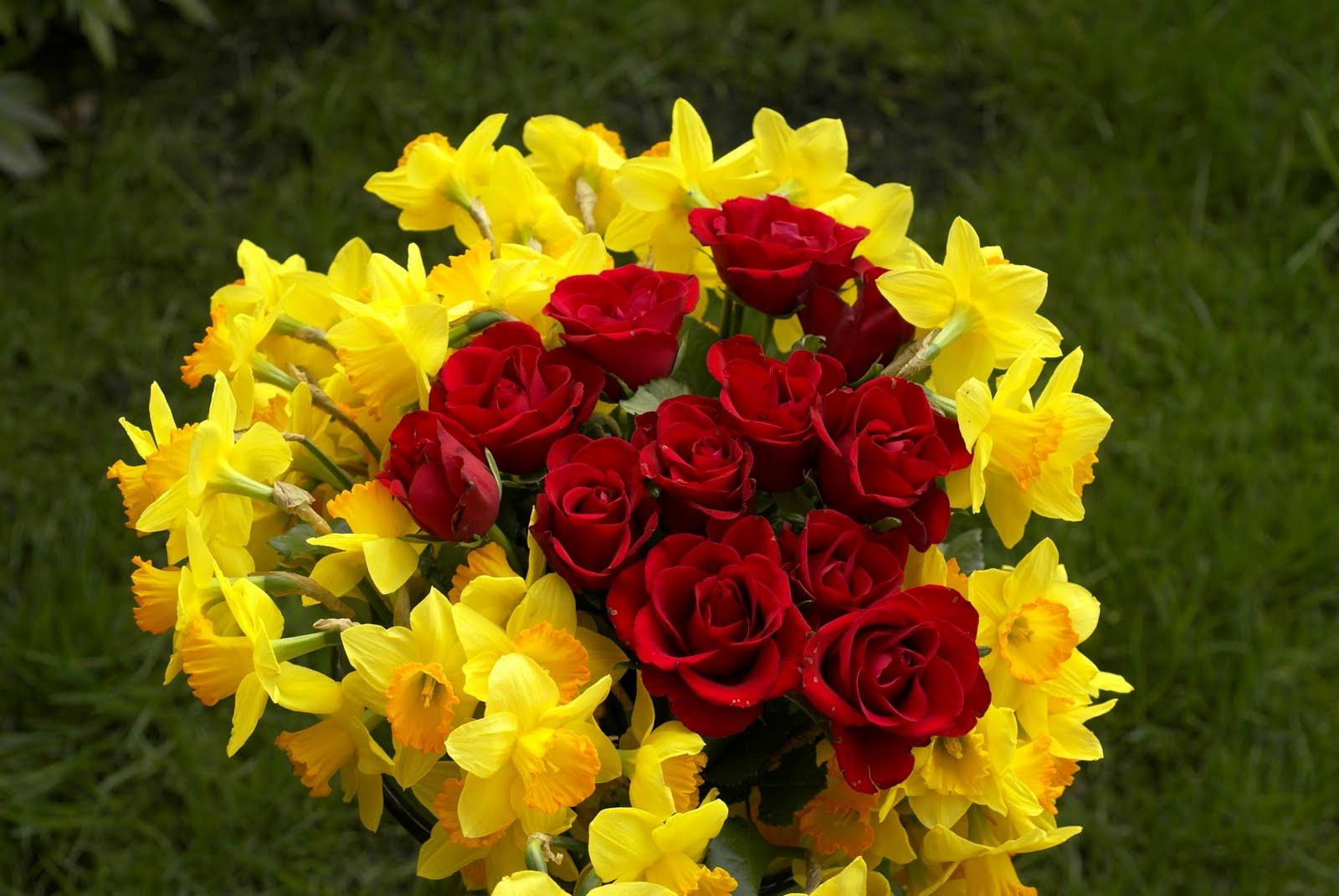 Download red rose flower high resolution widescreen 1600 x 1071 download red rose flower high resolution widescreen 1600 x 1071 mightylinksfo