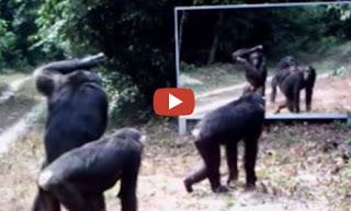 شاهد رد فعل الحيوانات في الغابةعندما رأت نفسها في المرآة لآول مرة .