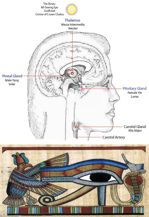 asem�nare 238ntre glanda pineal� și ochiul lui horus
