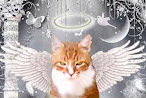 Angel Sammy~Run Free