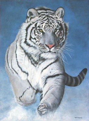 CARLOS Tigre sin Tiempo (CTsT)