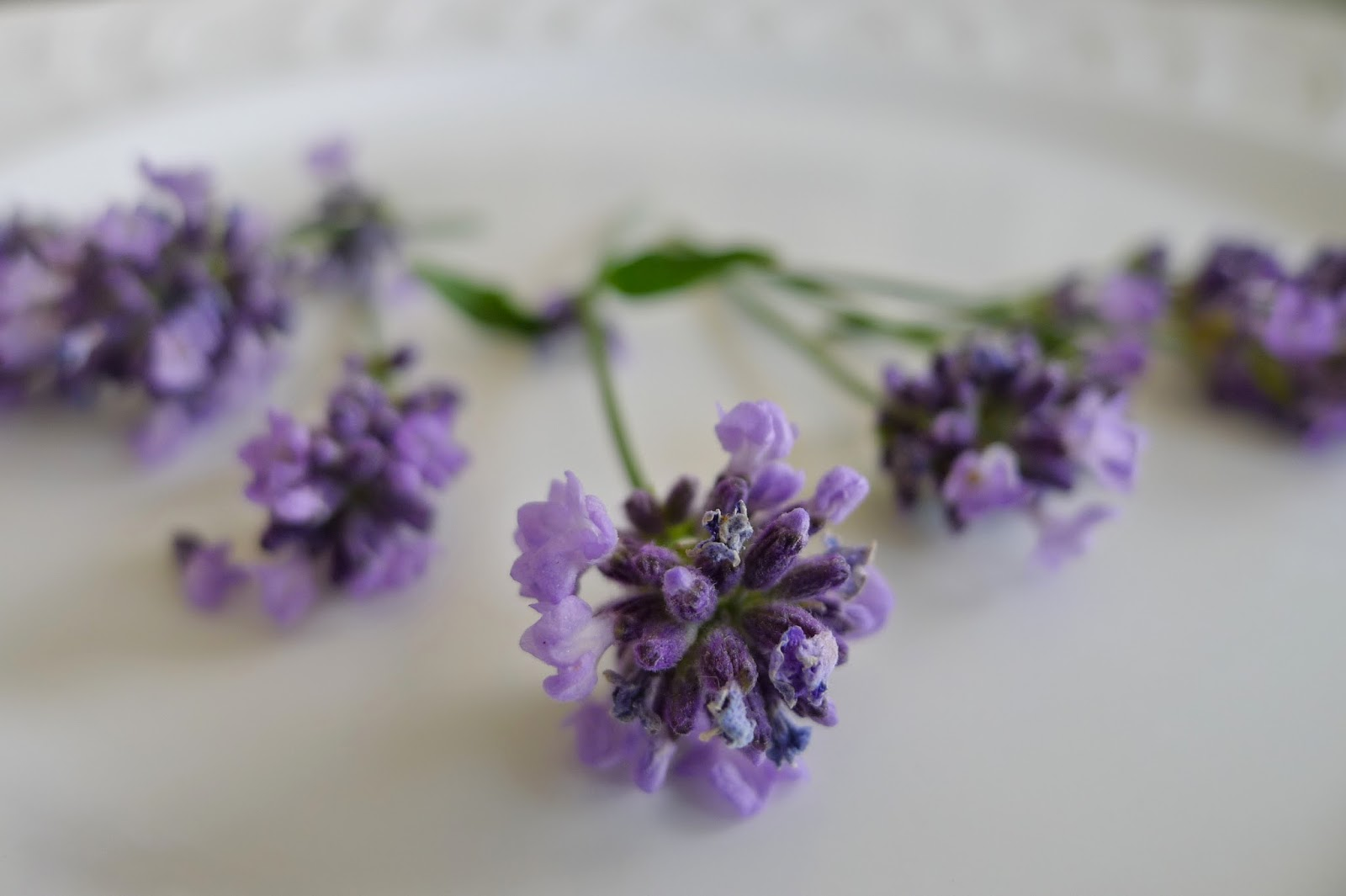 Lady lavender, edible flowers