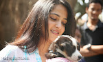 Anushka with Puppy at Blue Cross Pet Carnival Press meet-thumbnail