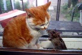 kucing sayang tukus