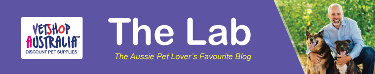 The Lab AU | VetShopAustralia.com.au Official Blog