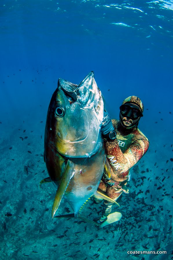Coatesman spearguns spearfishing ascension island for Your inner fish sparknotes