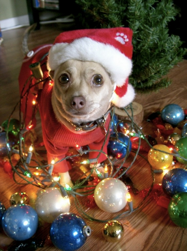 funny image collection funny christmas dog photos and