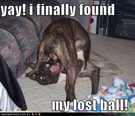 Funny Pictures Free HD: Funny Pictures Of Dogs