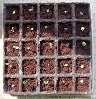 Burpee Seed Starting Kit with Sunflower Seedlings