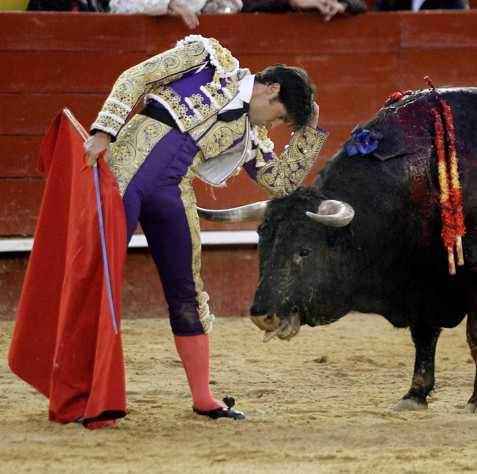 ... desvela los secretos del comportamiento del cerebro de los toreros