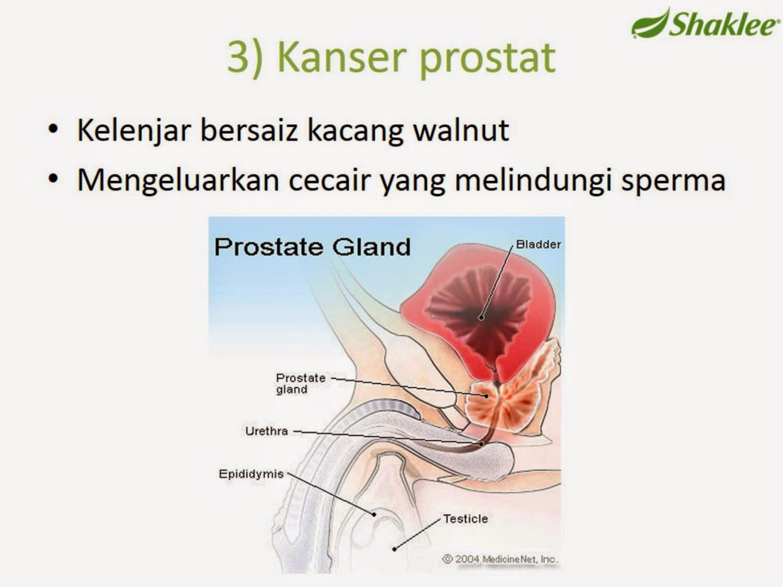 Lelaki & Prostat
