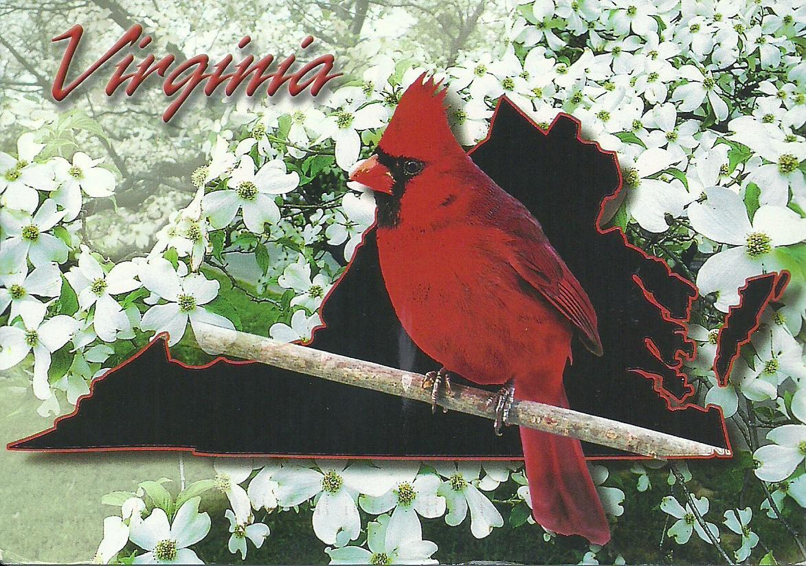 Projek Satu Dunia e World Project ™ USA Virginia State Bird