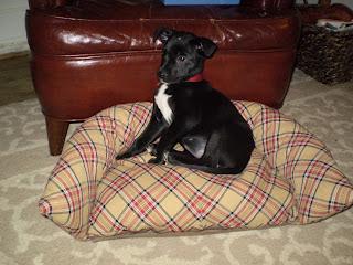 almohadones para perros